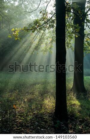 Golden sun rays in autumn forest - stock photo