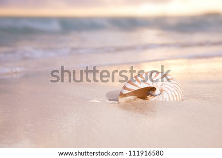 golden sunrise and nautilus shell in the sea