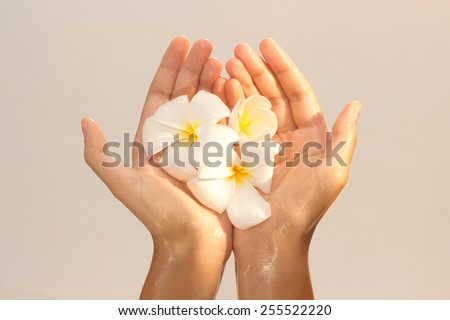 Golden tinted photo of female hands in oil holding magnolia flower on beige background view 8 - stock photo