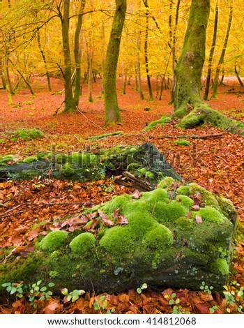Golden tones accentuated by the low autumn sun - an idyllic location for walking and cycling - stock photo