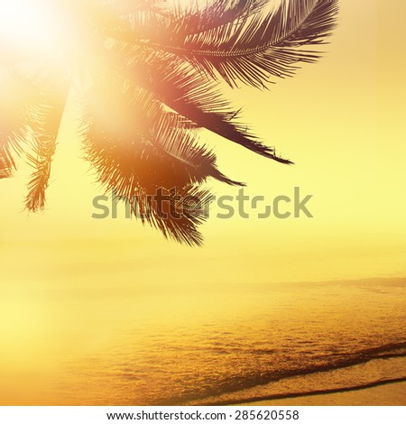 Golden tropical banner background. Sunset over the ocean. Coconut palm silhouette. - stock photo