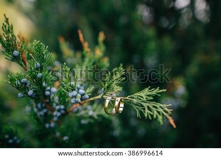 Golden wedding rings hanging on green branch - stock photo