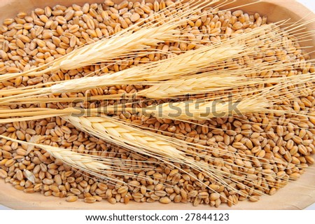 golden wheat ears and seeds