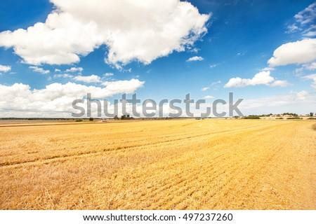 Golden wheat field on blue cloudy sky background. Harvest time. Vibrant multicolored outdoors horizontal image with copy space. Vintage filter.