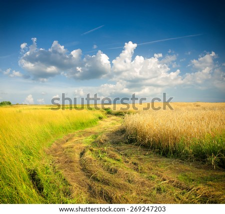 Golden wheat field with cloudy sky in background
