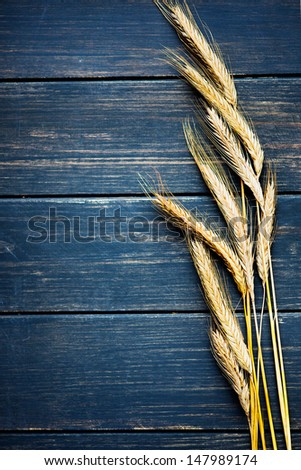 Golden wheat on navy blue rustic wooden board frame - stock photo