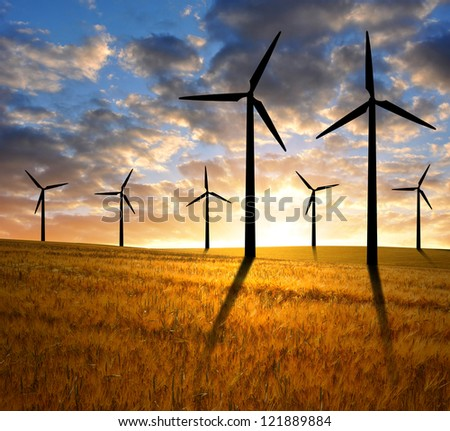 golden wheat with wind turbines in the sunset