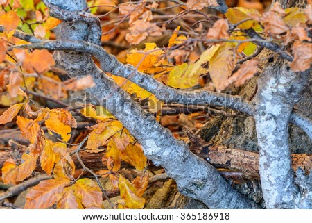 Golden yellow leaves with branches in forest. Autumn leaves frame, photo of natural background, yellow autumnal foliage, trees in the fall. - stock photo