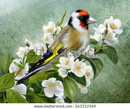 Goldfinch on a branch of a flowering Jasmine - stock photo