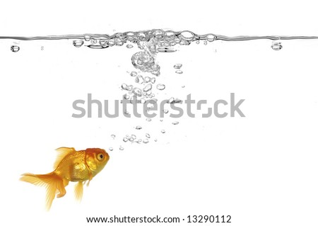 Goldfish and air bubbles. Taken on a clean white background - stock photo