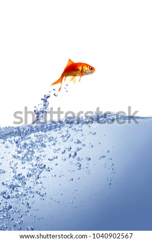 goldfish and clean water