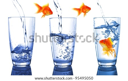 goldfish and glass showing financial growth concept - stock photo