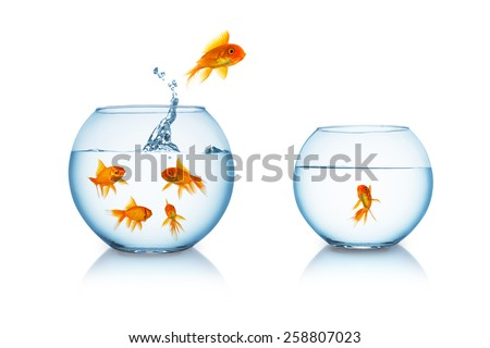 goldfish escapes in a fishbowl with his friend