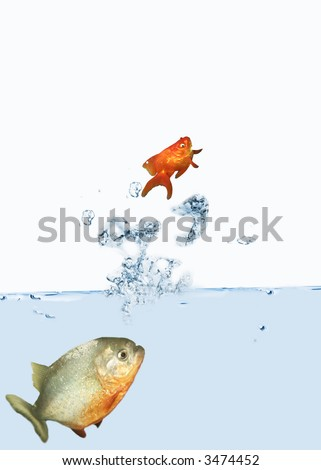 Goldfish escaping from a piranha - stock photo