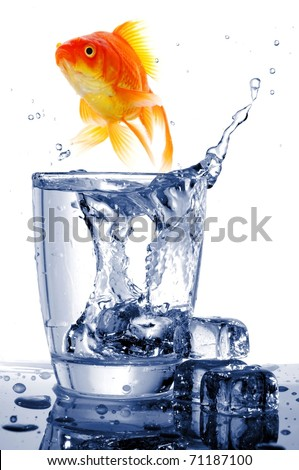 goldfish in water glass fishtank isolated on white background - stock photo
