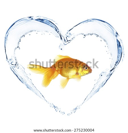 Goldfish in water splashes in shape of heart, isolated on white - stock photo