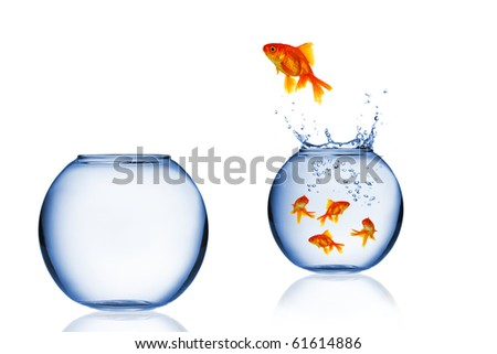 Goldfish jump into the aquarium - stock photo