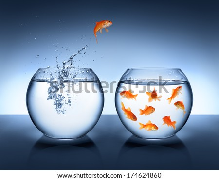 goldfish jumping out of the water - alliance concept  - stock photo