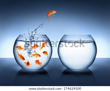 goldfish jumping out of the water - improvement and career concept  - stock photo