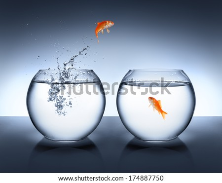 goldfish jumping out of the water - love concept  - stock photo