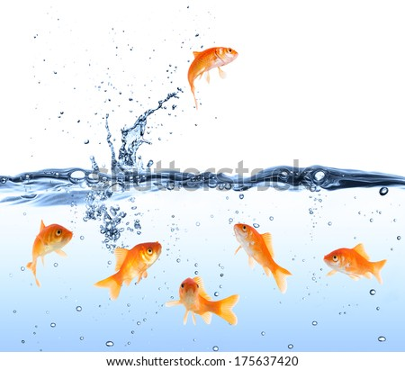 goldfish jumping to Freedom - crowd looking it  - stock photo