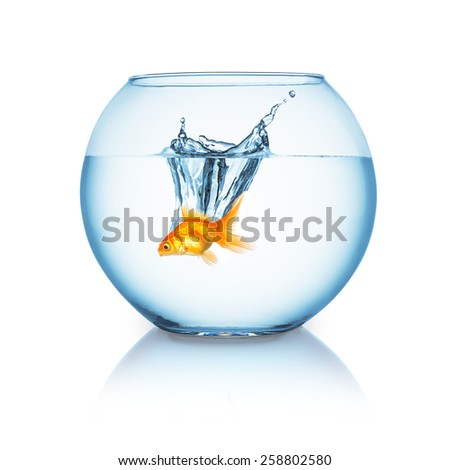 goldfish jumps in a fishbowl - stock photo