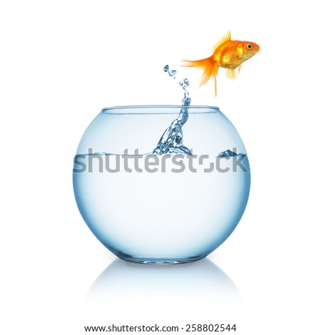 Goldfish jumps in to liberty out of a fishbowl - stock photo