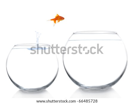 goldfish moving to a better and bigger house - stock photo