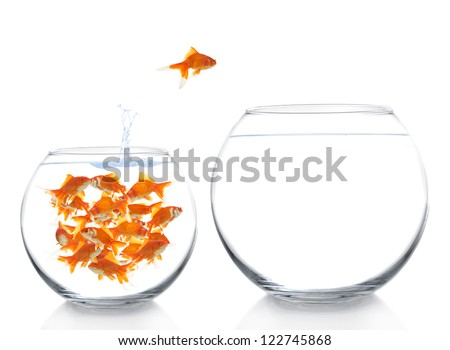 goldfish moving to a bigger house - stock photo