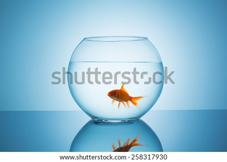 goldfish open mouth in a fishbowl - stock photo