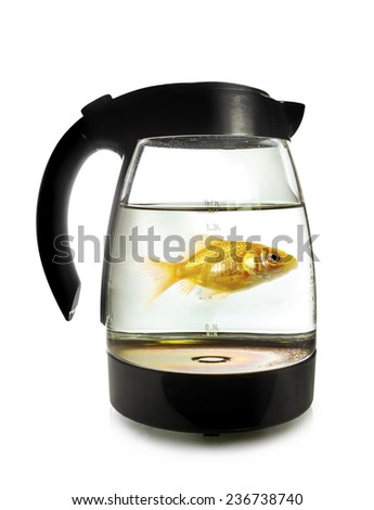 Goldfish swimming around in an electric kettle, isolated on white background - stock photo