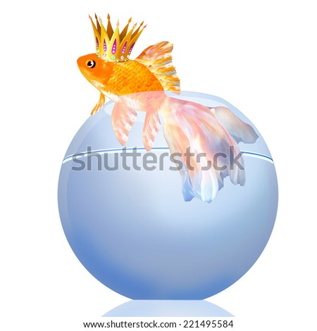 Goldfish with a crown in an aquarium - stock photo