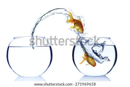 Goldfishes in aquarium isolated on white - stock photo