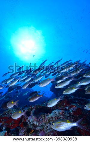 Goldlined sea bream - stock photo
