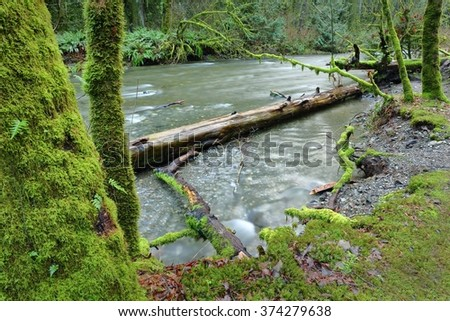 Goldstream Park, Victoria, BC. A long exposure shot of the Goldstream River flowing past lush vegetation in Goldstream Provincial Park near Victoria, BC, Canada. - stock photo