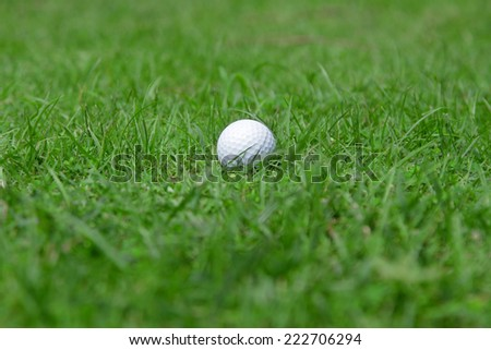 golf-ball on green grass in golf course - stock photo