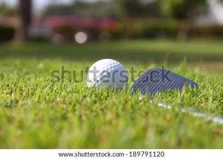 Golf balls and Driver on green grass background - stock photo