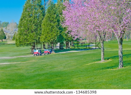 Golf course at cherry blossom time with two  golf carts at the background. - stock photo