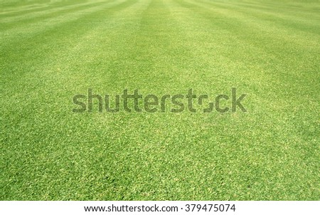 Golf Courses green lawn pattern textured background. - stock photo