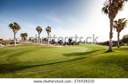 Golf field with palms in sunlight
