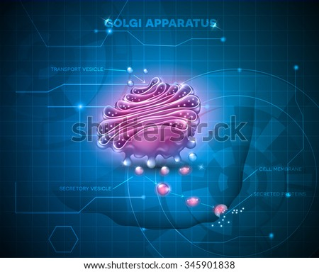 Golgi apparatus on an abstract technology background