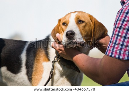 Gomel, Belarus - May 27: Exhibition of hunting dogs. competitions in conformation May 27, 2013 in Gomel, Belarus .