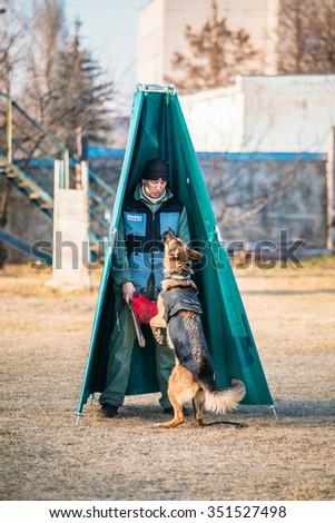 GOMEL, BELARUS - NOVEMBER, 22, 2014: German shepherd dog training in Gomel Regional sports club and decorative dog-breeding - stock photo