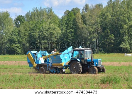Gomel region, Belarus - August 25, 2016: Tractor harvests potatoes on the field