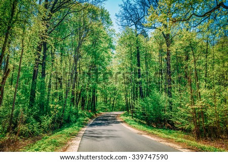 Good Asphalt Forest Road In Sunny Summer Day. Lane Running Through Spring Deciduous Forest - stock photo