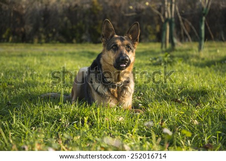 Good dog - stock photo