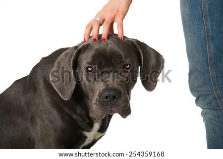 Good dog - stock photo