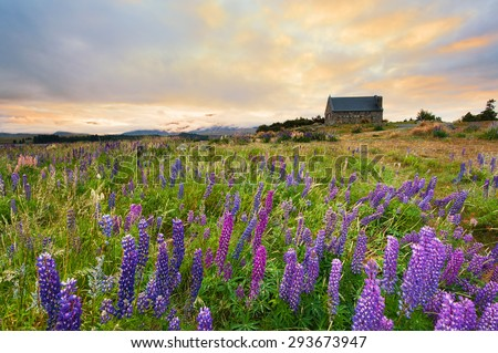 Good morning Church Of Good Shepherd with russell lupin flowers and nice morning sky, Lake Tekapo, Mackenzie, New Zealand