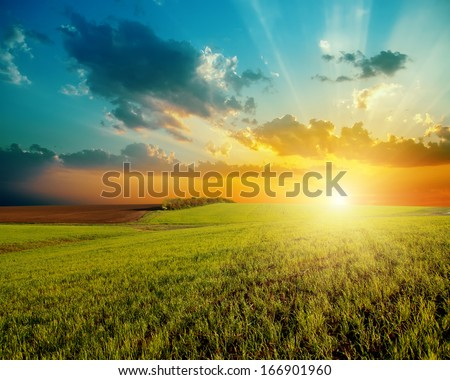 good sunset and green agriculture field - stock photo