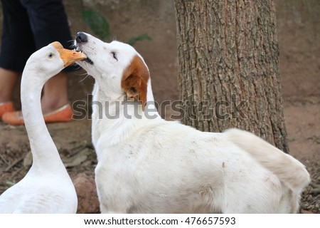 Goose and dog friendship